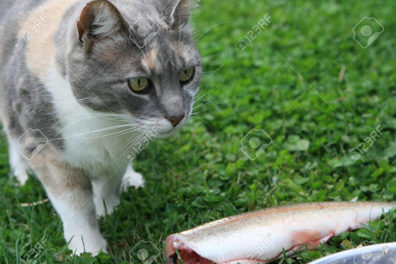 gatos y peces  Foto de archivo - 2893580