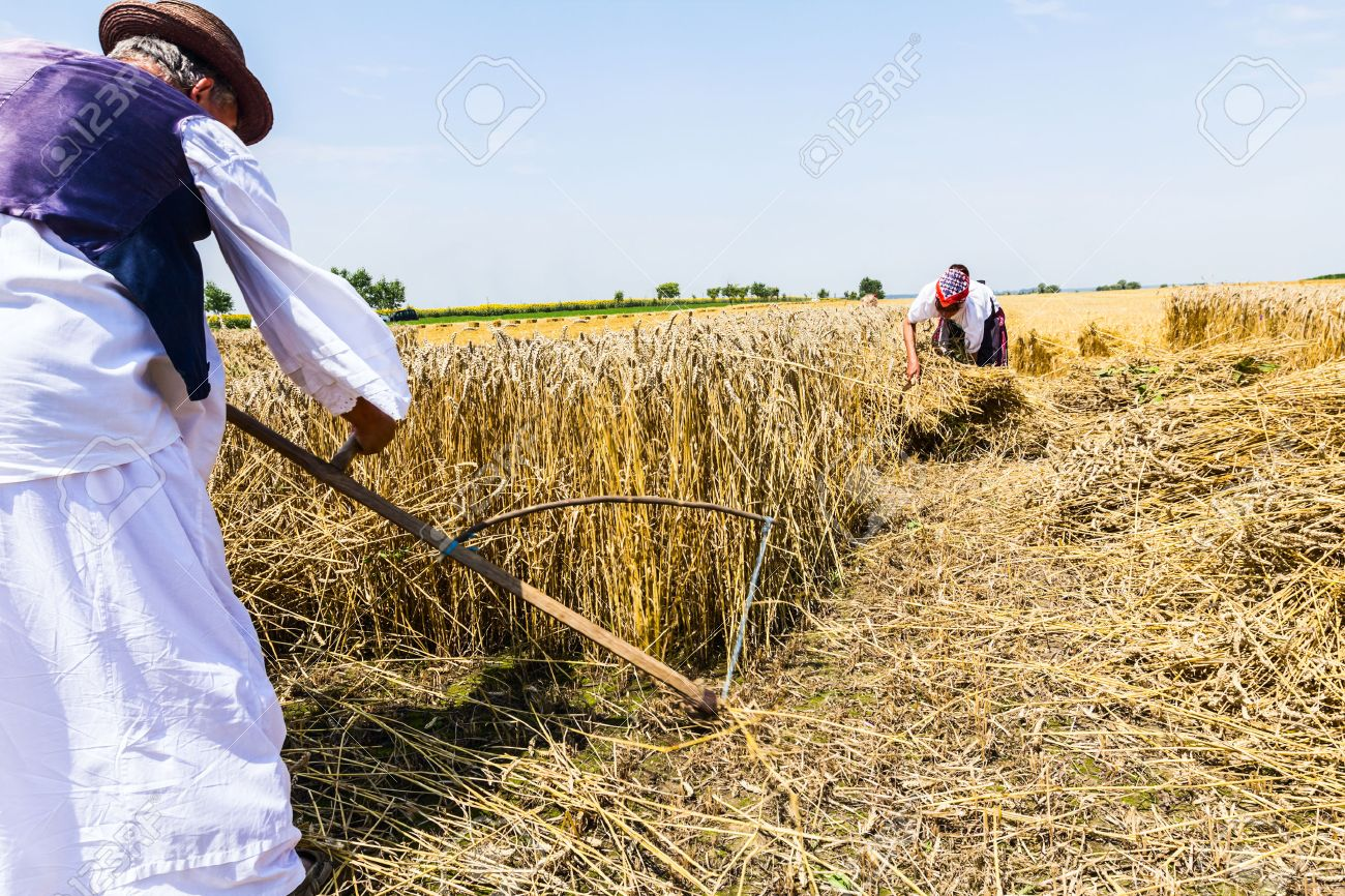 https://previews.123rf.com/images/roman023/roman0231312/roman023131200009/24258528-Farmers-reaping-on-wheat-field-in-the-traditional-old-fashion-way-Stock-Photo.jpg