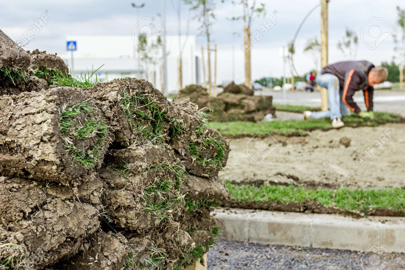 Stack, heap of sod rolls on wooden pallet for installing new