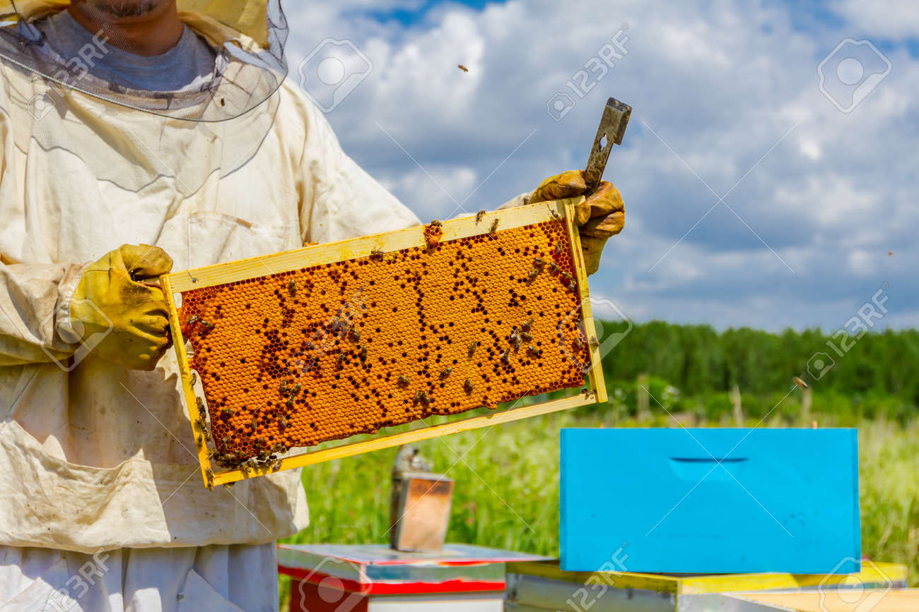 Beekeeper is holding closed up honeycomb full with honey on wooden frame. - 93989790