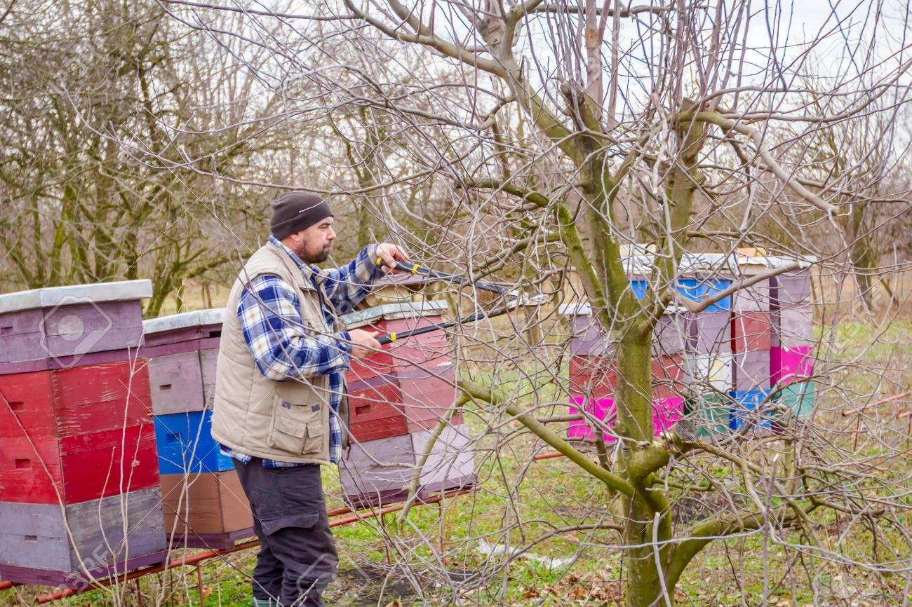 Arbre Fruitier D Intérieur agriculteur choisit des branches d & # 39 ; arbres fruitiers dans un verger  à l & # 39 ; intérieur du petit déjeuner à l & # 39 ;