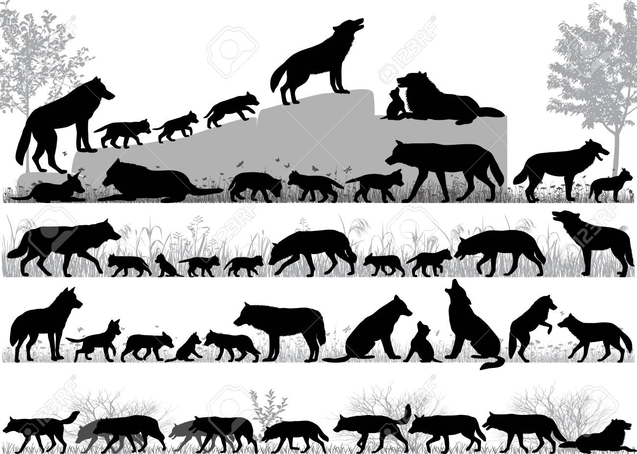 Silhouettes of wolves and its cubs outdoors - 102668175