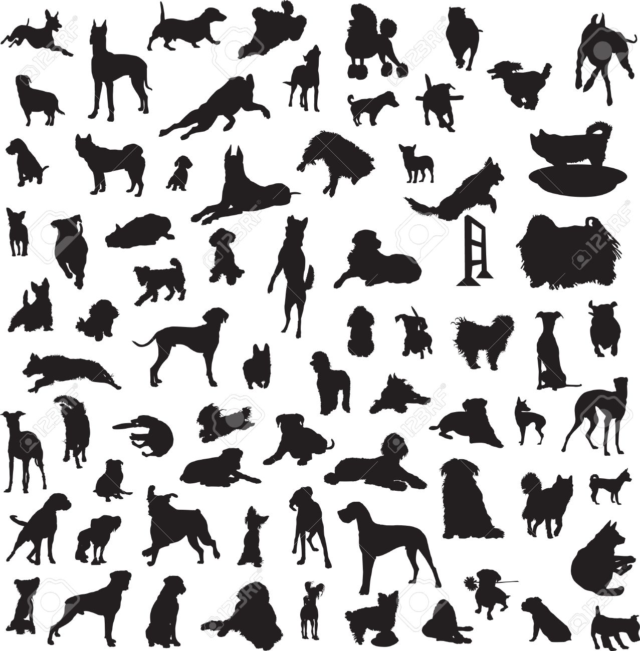 set of silhouettes of different breeds of dogs and for the different classes Stock Vector - 14780902