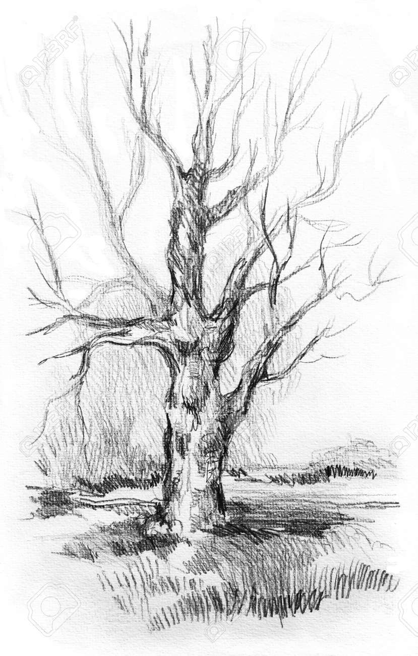 Dry tree without leaves with sketch grass graphite pencil drawing from nature on white background