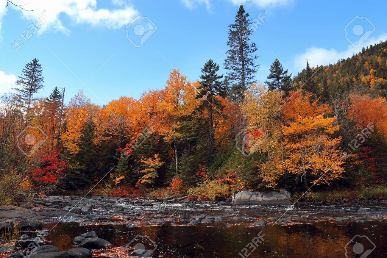 foto de Des éclaboussures De Forêt De Couleur Se Reflètent Dans L'eau ...