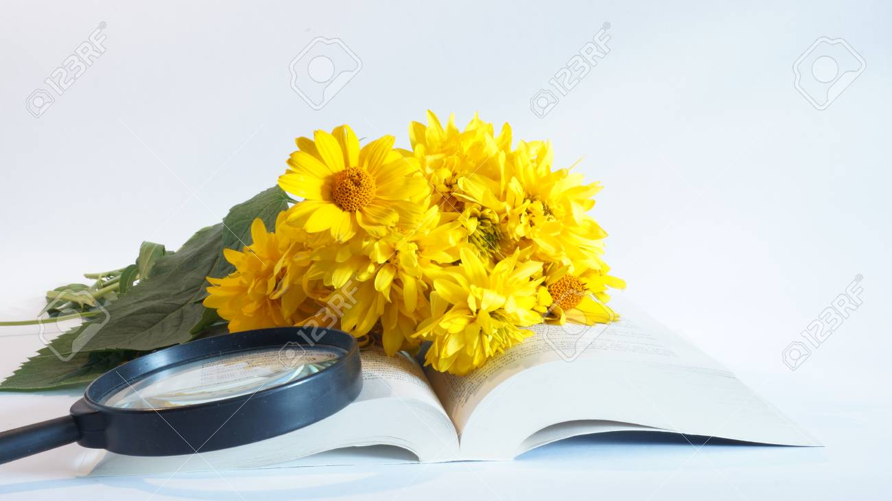 Still Life Of Yellow Flowers And Books Isolated On White Background