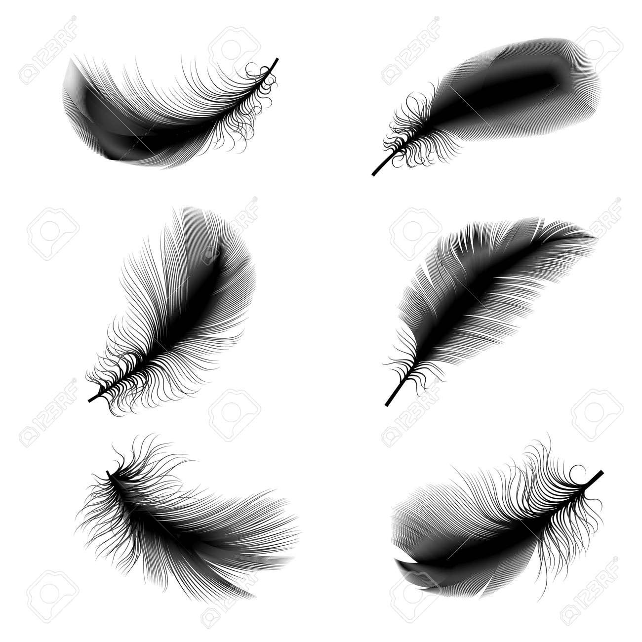 鳥の羽のベクトル イラストのイラスト素材ベクタ Image 38393545