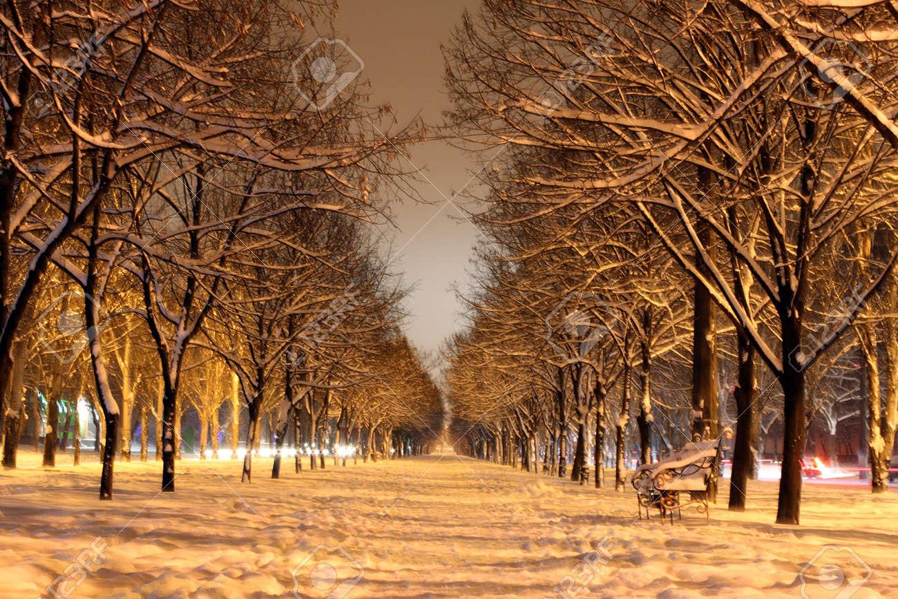winter avenue at night Stock Photo - 8456116