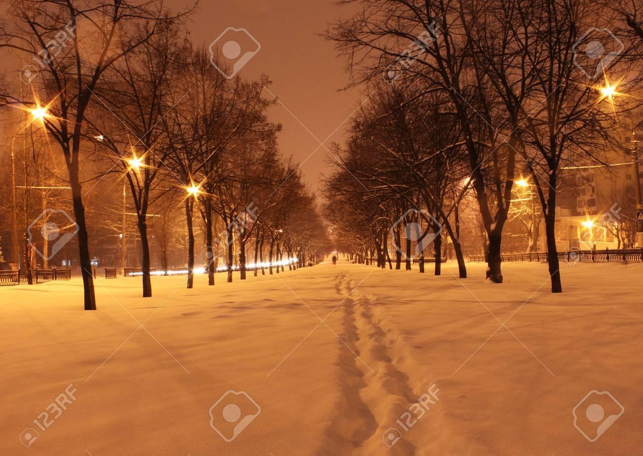 avenue at winter night Stock Photo - 12549253