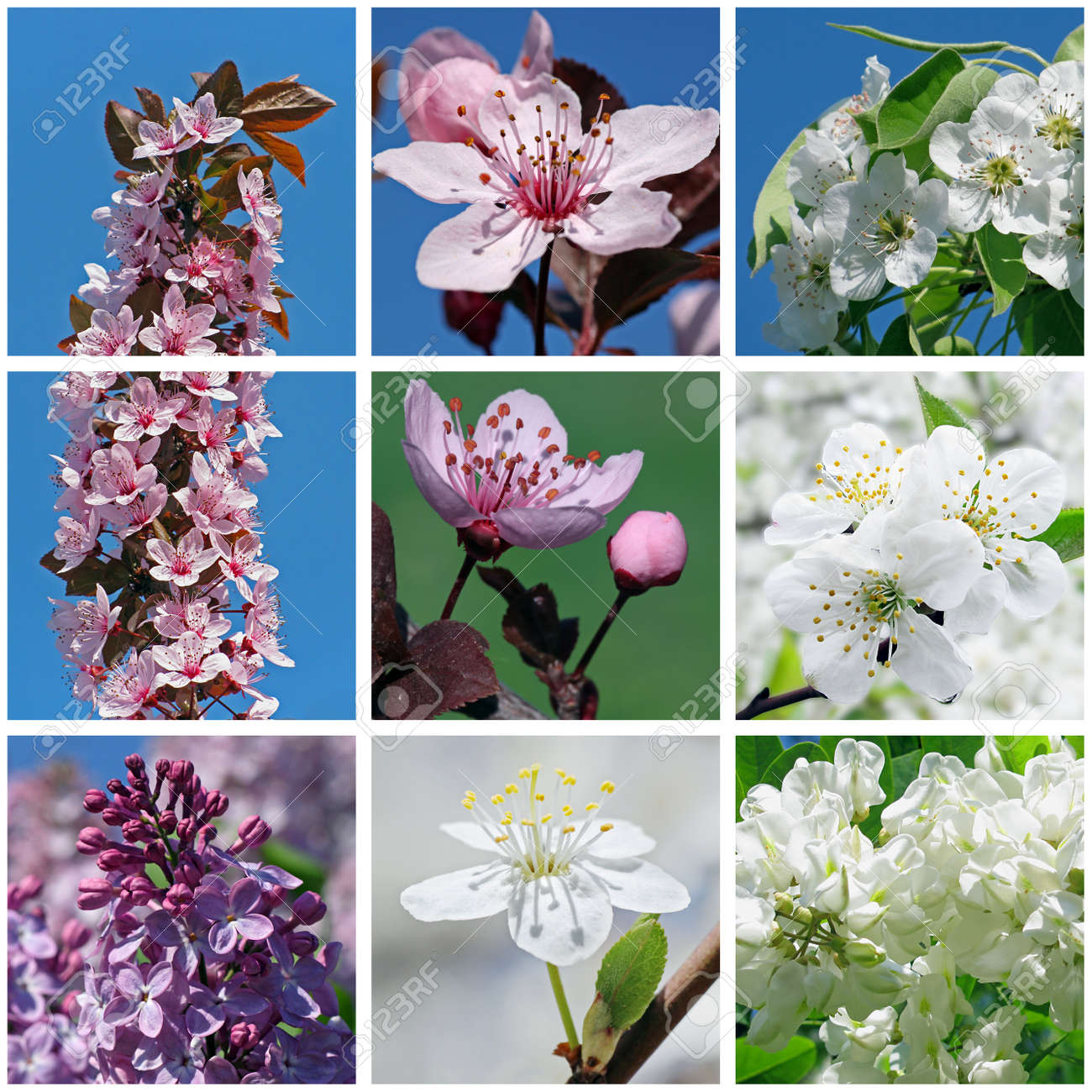 collage with close up of  blossoming trees and bushes Stock Photo - 18622911
