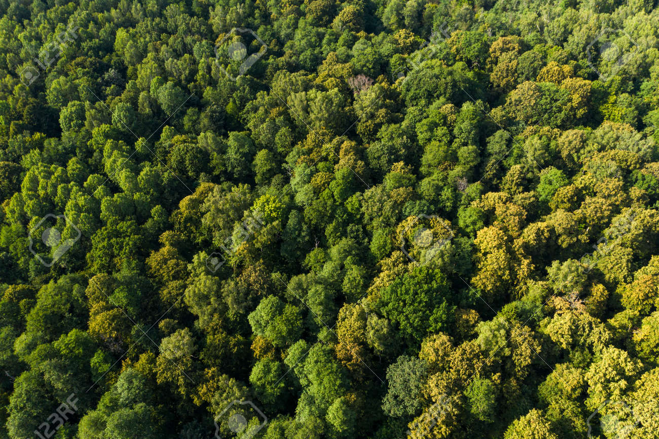 View from the height of the green deciduous forest. Aerial view. Shot on a drone. - 144112370