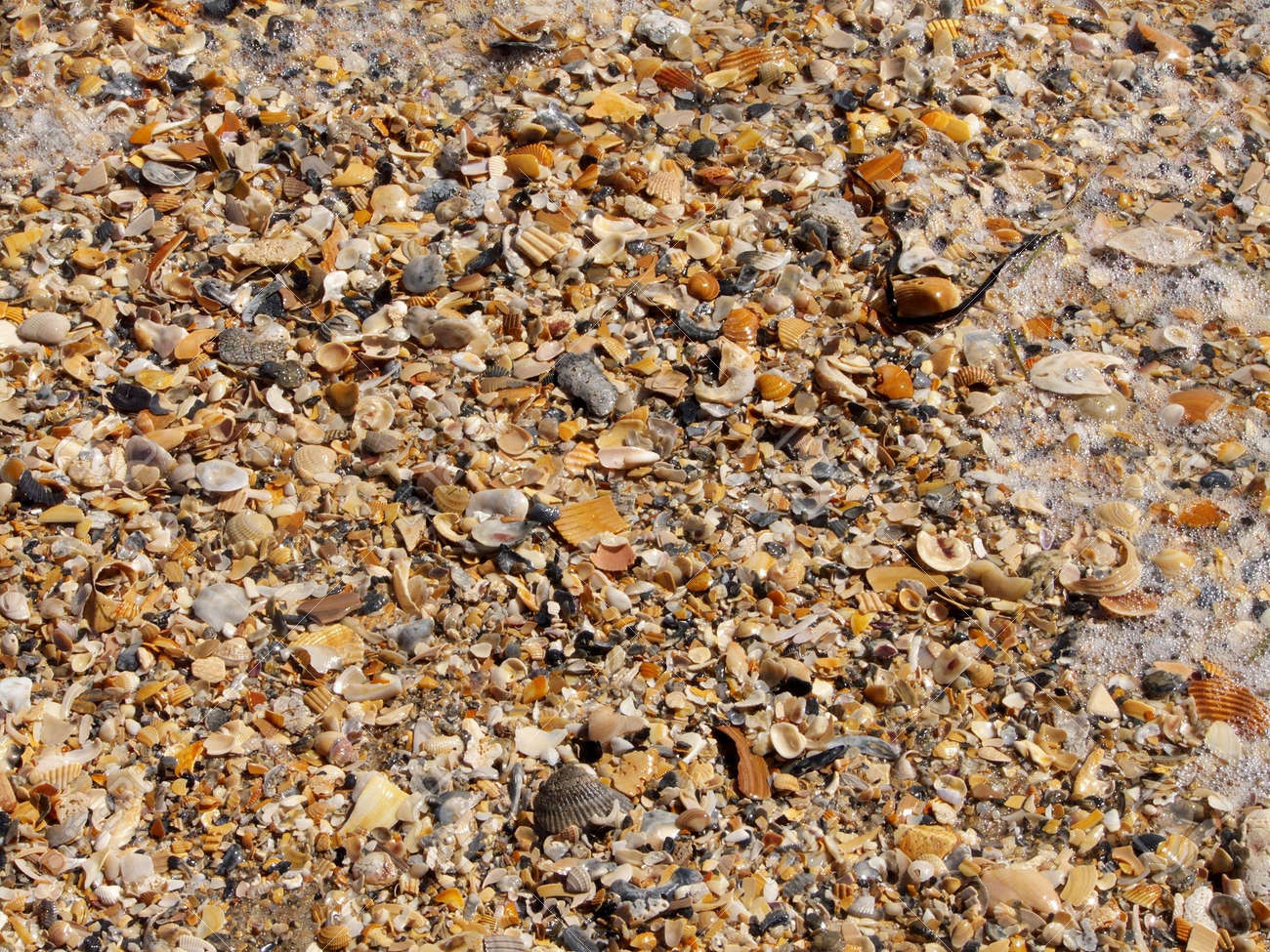 Pile of seashells of different shapes and colors washed up on St. George Island, Florida, some crushed. Scene includes foam and a piece of seaweed. Stock Photo - 6346486