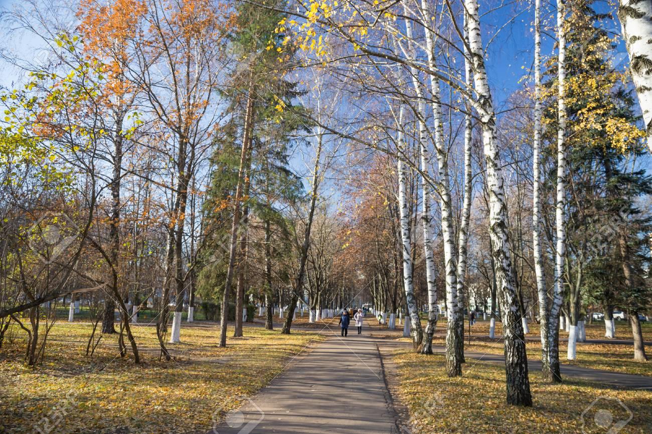 白樺の木が秋の公園 秋の自然の風景の写真 背景と壁紙のイメージです