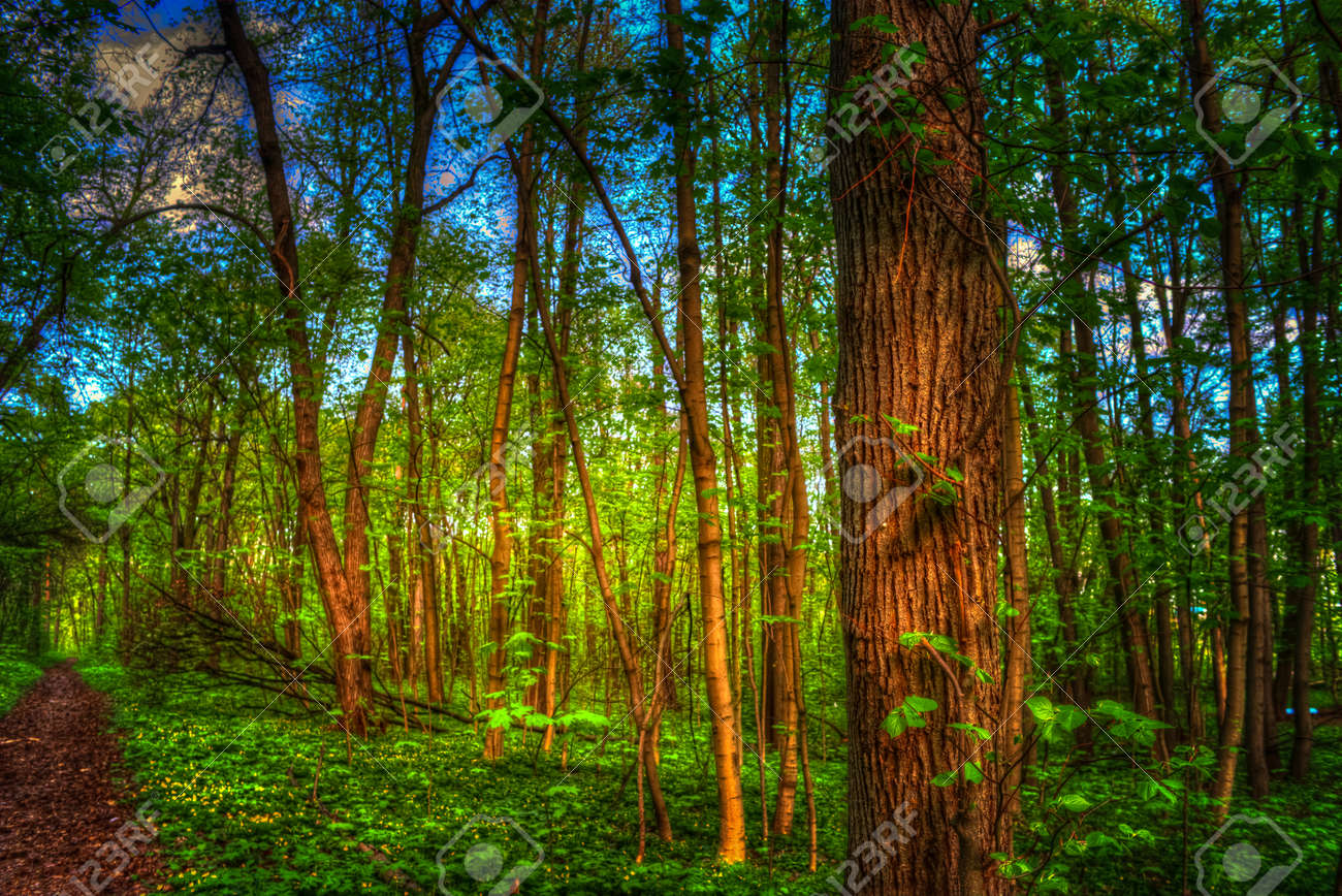 Colorful Summer Landscape. Pathway In The Woods. Green Trees.. Stock ...