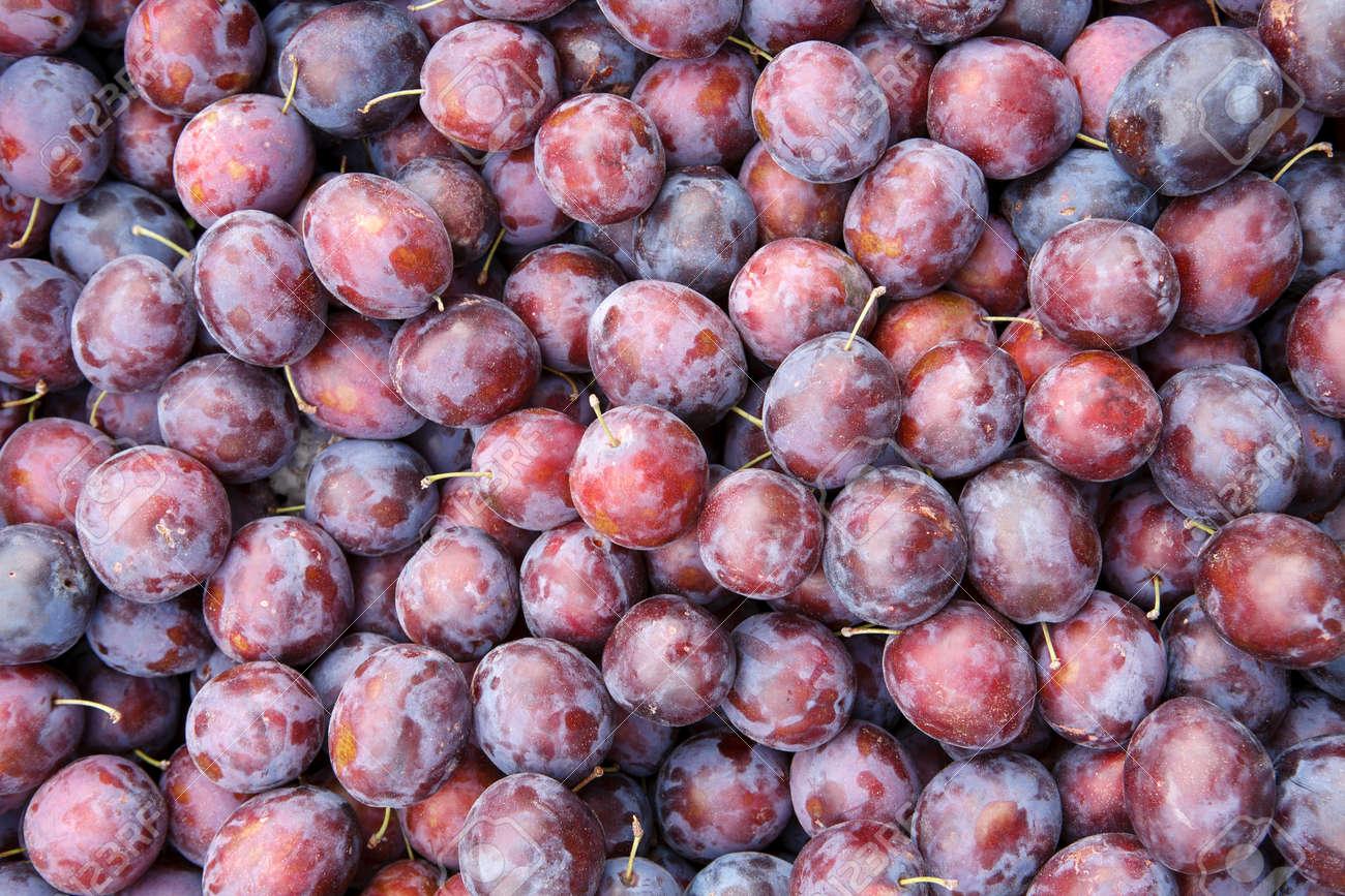 mature plum fruits photography of indigo colored plums stock