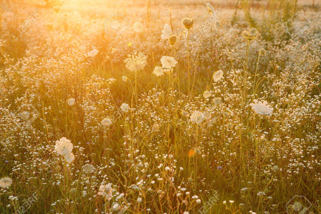 Summer Wildflower Meadow Outdoors Photography Of Wildflowers