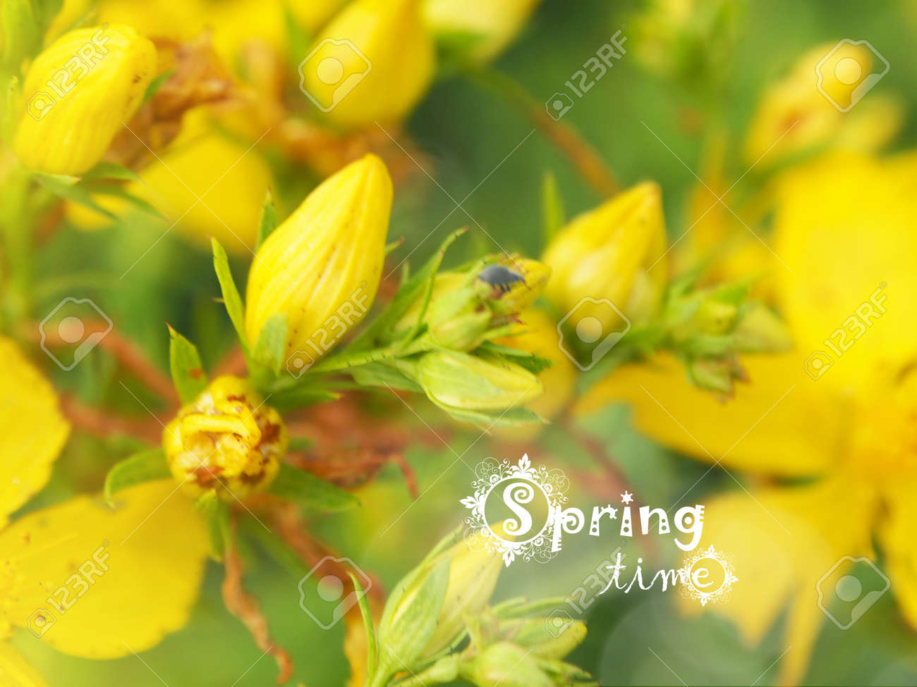 Spring background with beautiful yellow flowers stock photo picture spring background with beautiful yellow flowers stock photo 54630321 izmirmasajfo