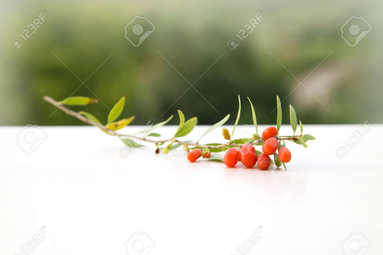 branch with goji berries - 61732533