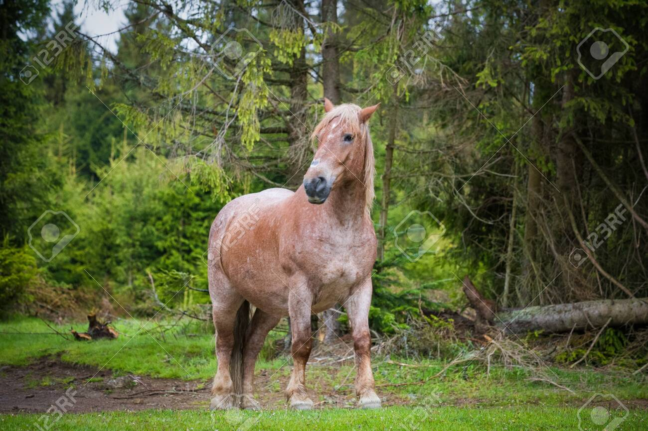 Wild Horses Running Free At The Mountains Stock Photo Picture And Royalty Free Image Image 148709156