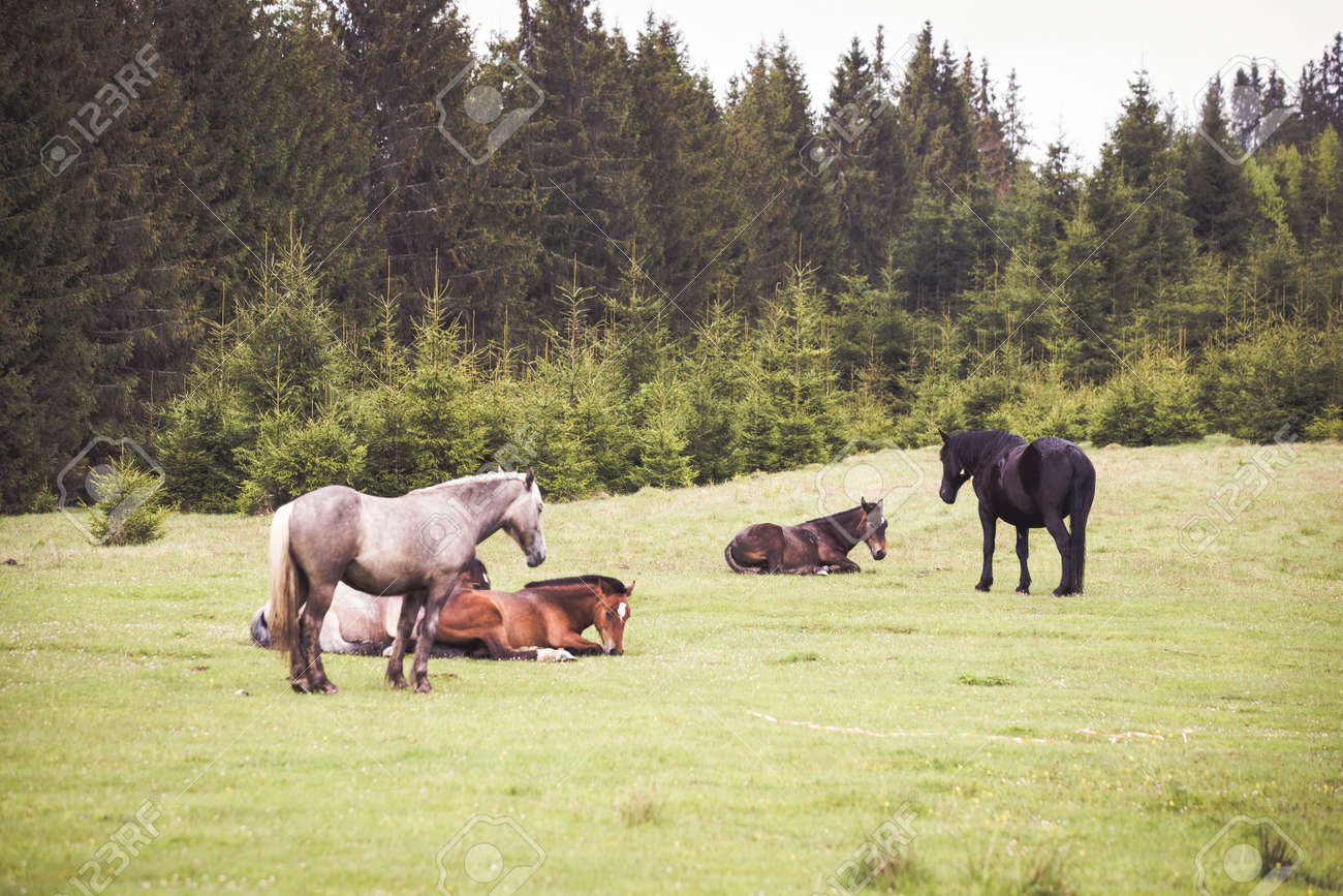 Wild Horses Running Free At The Mountains Stock Photo Picture And Royalty Free Image Image 148709443