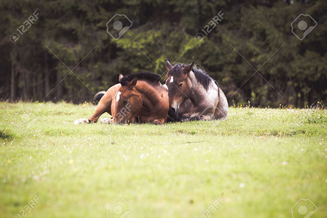 Wild Horses Running Free At The Mountains Stock Photo Picture And Royalty Free Image Image 149492153