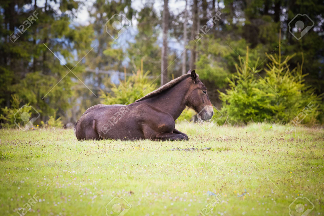 Wild Horses Running Free At The Mountains Stock Photo Picture And Royalty Free Image Image 148708924