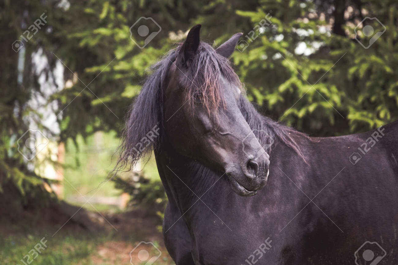 Wild Horses Running Free At The Mountains Stock Photo Picture And Royalty Free Image Image 148709616