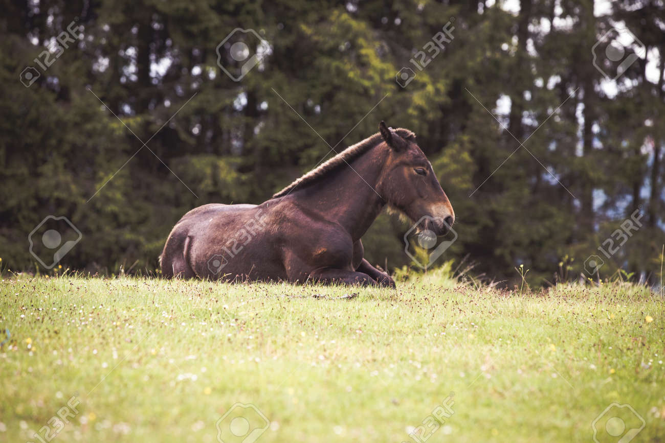 Wild Horses Running Free In The Forest Stock Photo Picture And Royalty Free Image Image 149492174