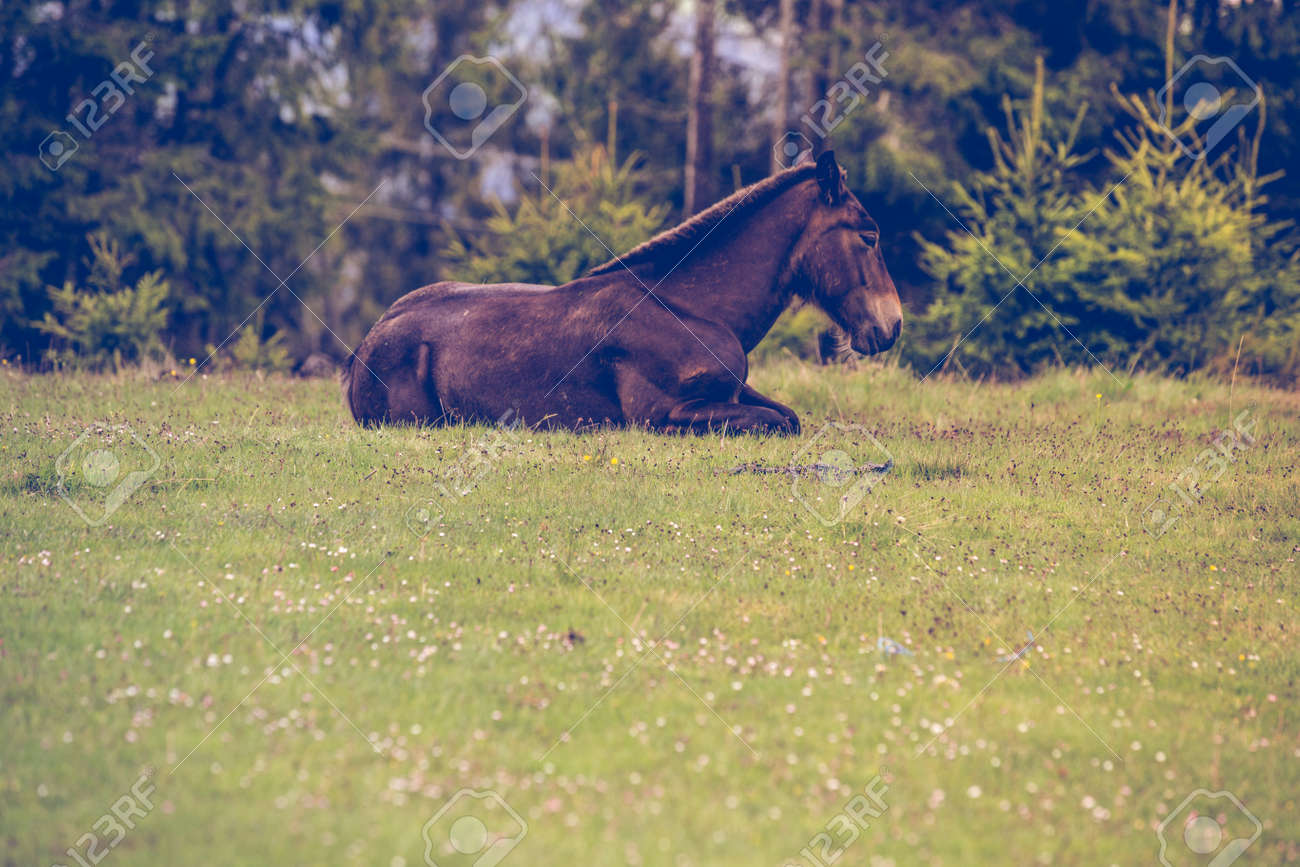 Wild Horses Running Free In The Forest Stock Photo Picture And Royalty Free Image Image 149492176