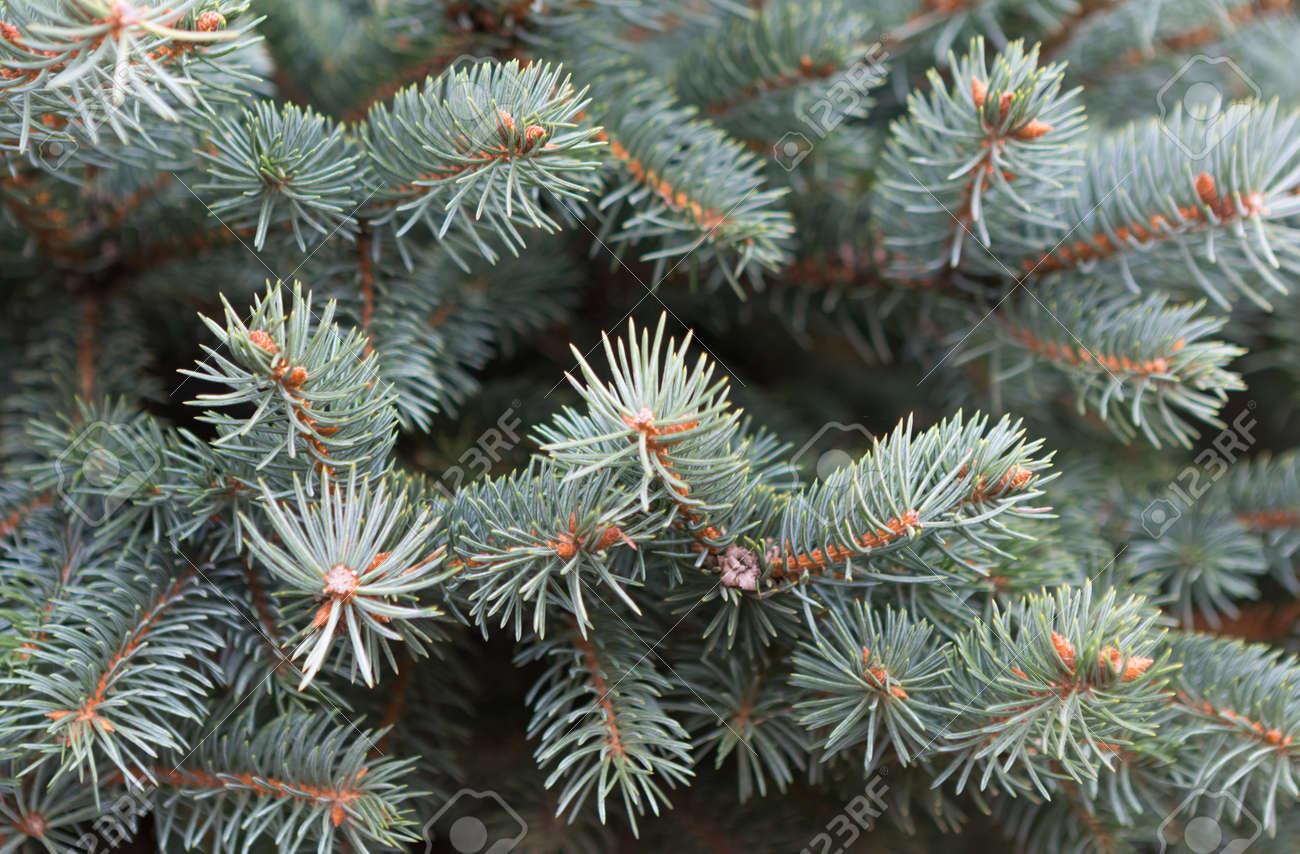 Weihnachtsbaum Tannenbaum.Stock Photo