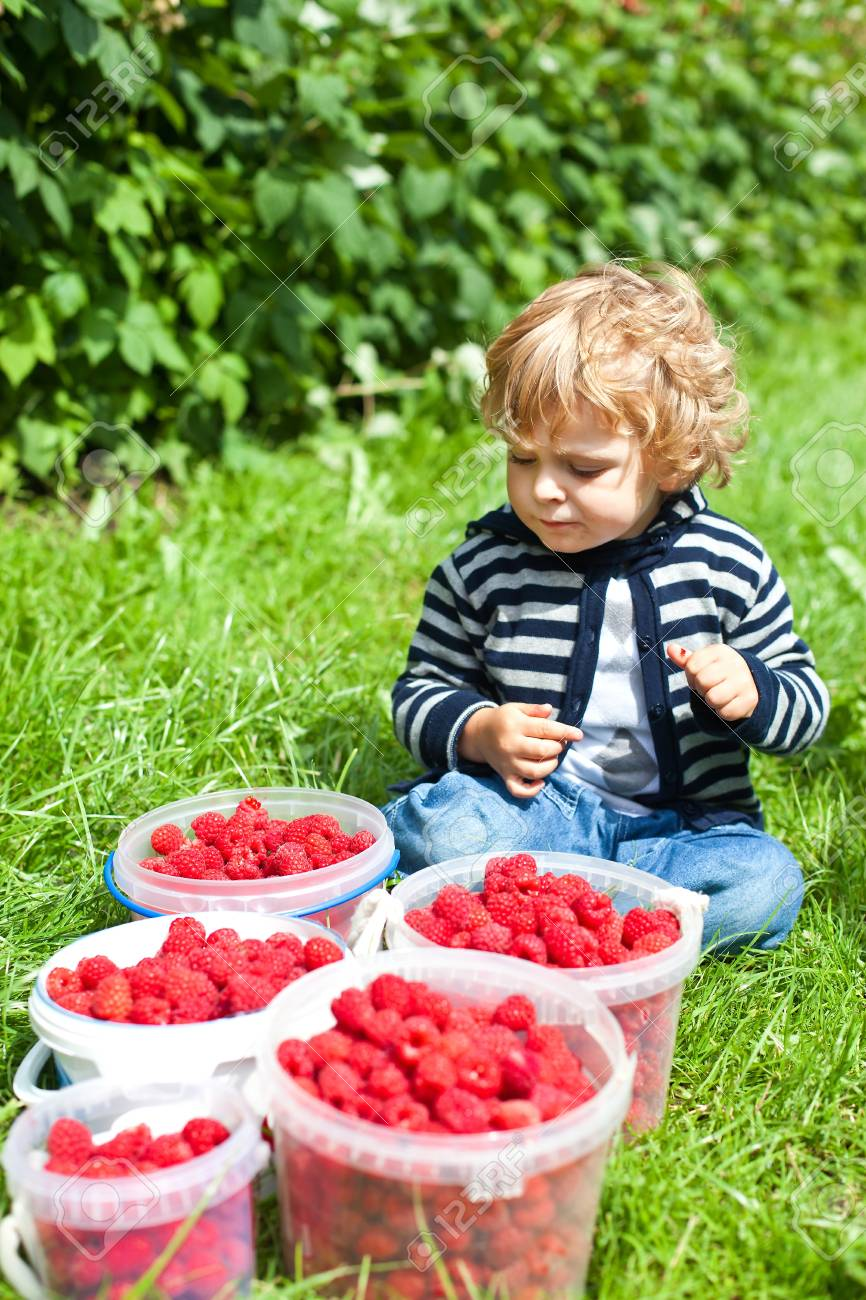 Adorable baby boy with ripe raspberry buckets Stock Photo - 15040941
