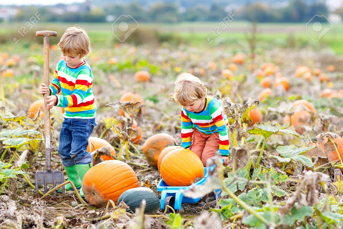 Two little kids boys picking pumpkins on Halloween or Thanksgiving pumpkin patch - 108199217