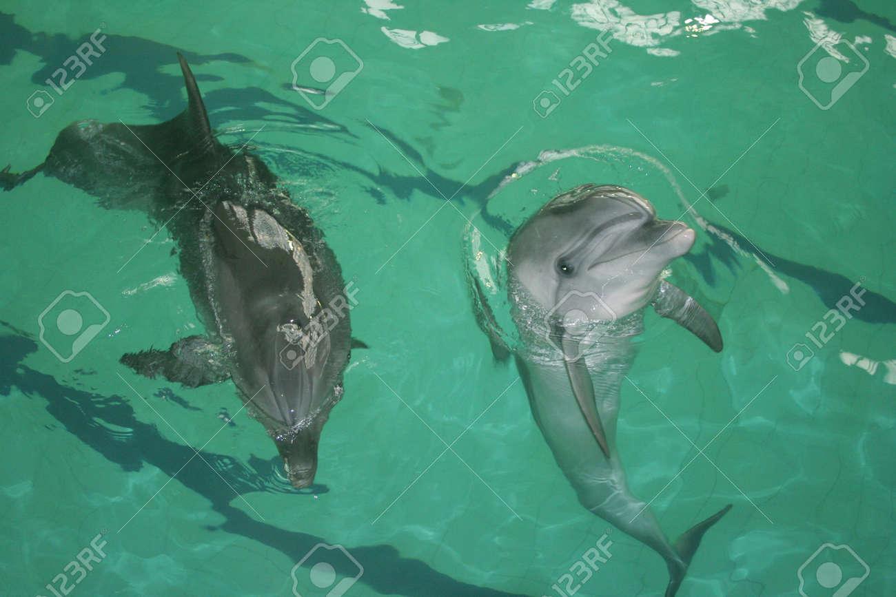 Dolphin Stock Photo - 6043919