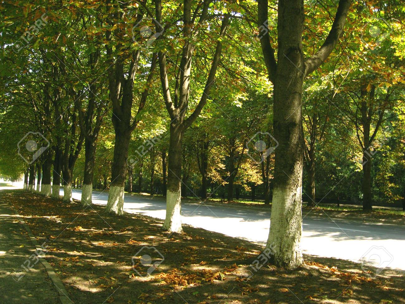 Park. Approaches autumn Stock Photo - 7700475