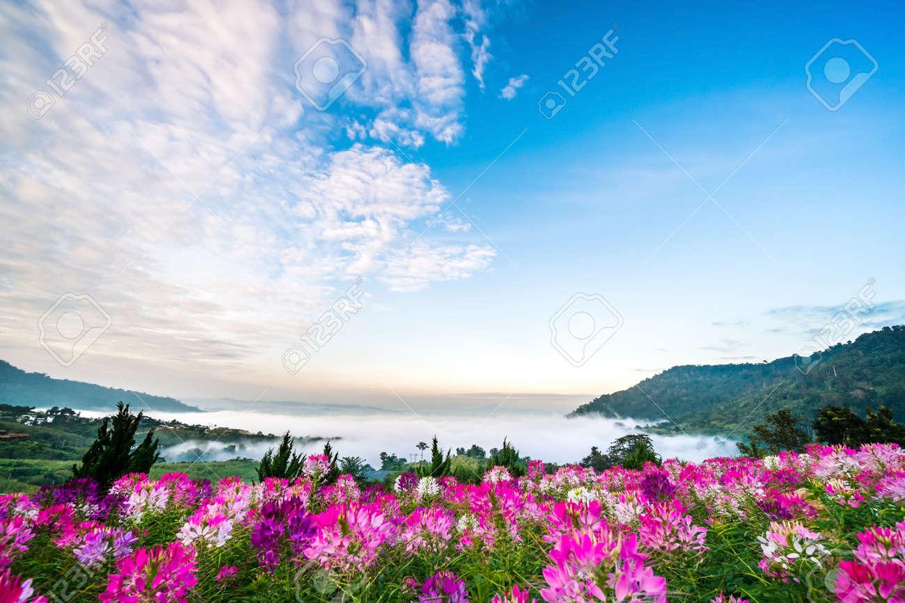 Beautiful scenery pictures flowers newwallpapers colorful flowers and beautiful scenery comfortable mist stock izmirmasajfo