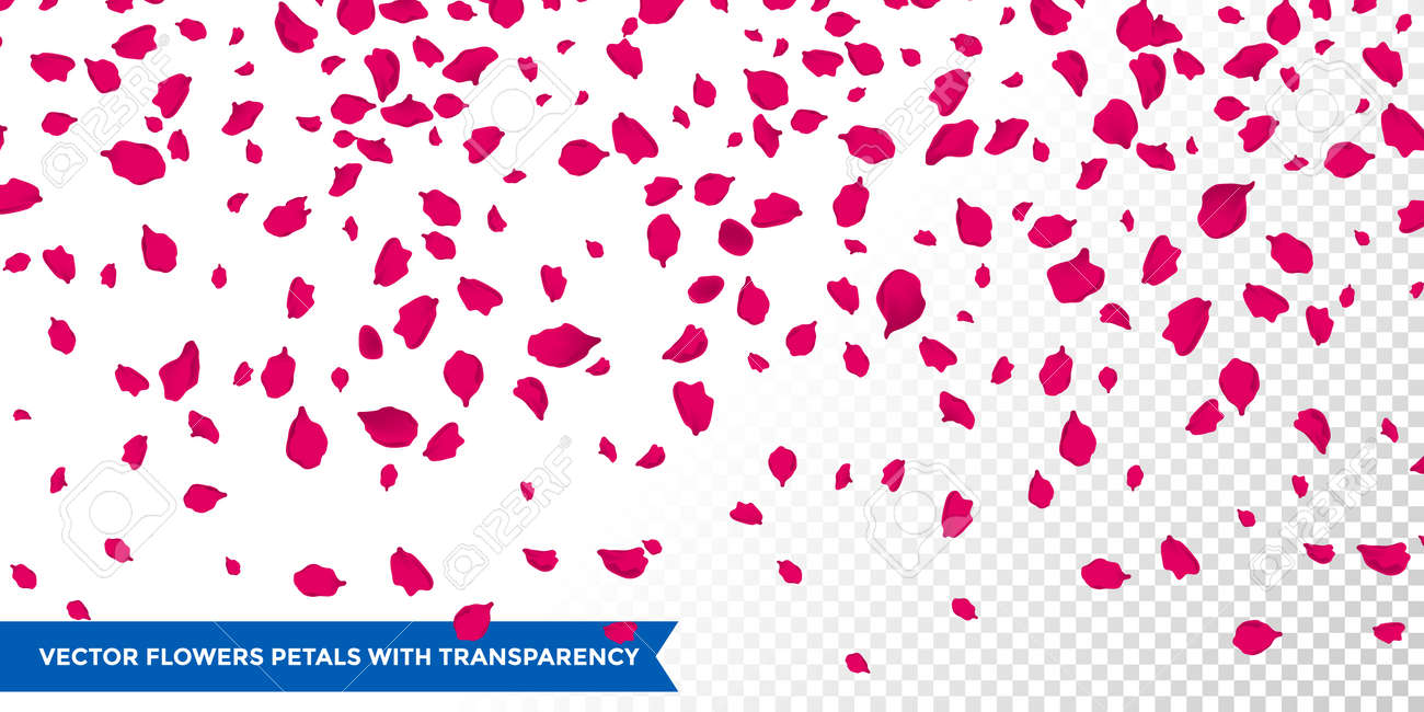 Flowers Petals Fall On Vector Transparent Background. Women Day ...