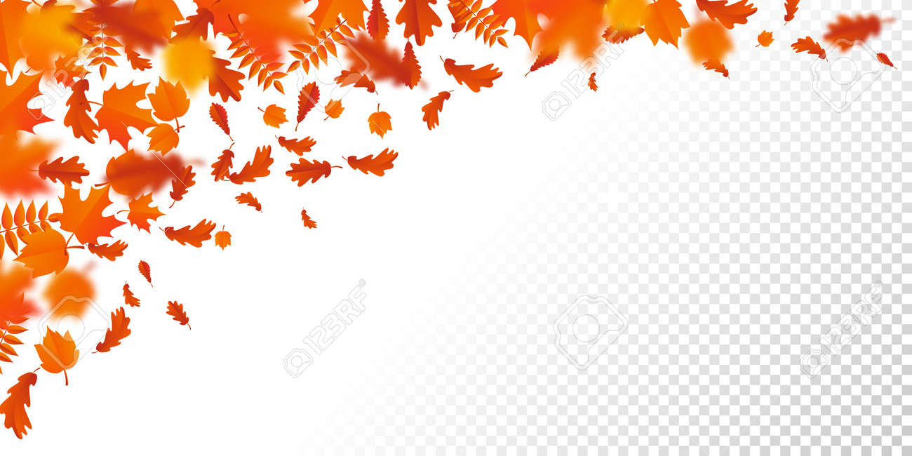 autumn leaf fall or autumnal falling leaves pattern on transparent