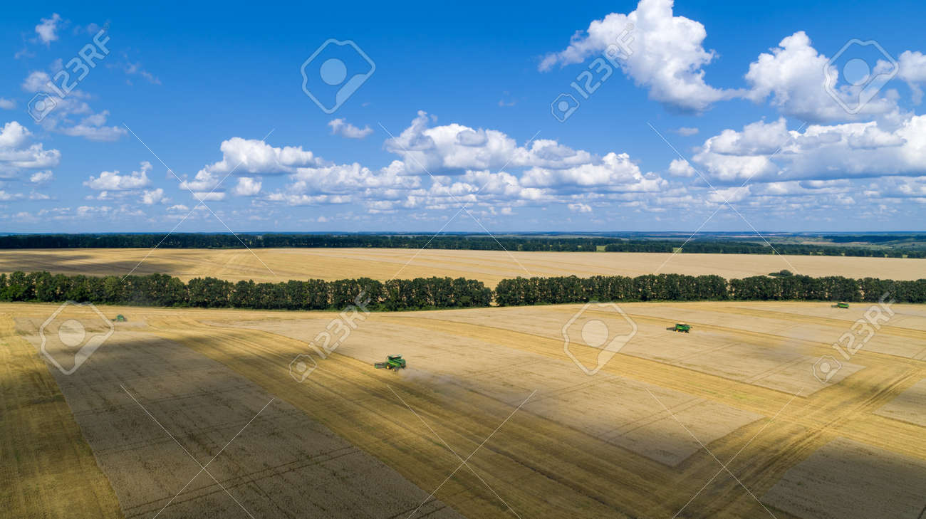 Harvester Machine to Harvest Wheat Field Working Aerial View - 172375285