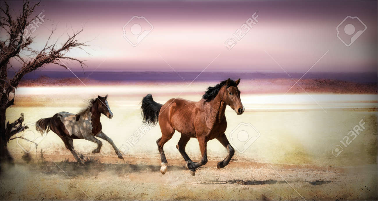 Two Horses Running Wild In The Field In A Grassland A Pinto And Saddle Bred Coming From Their Photograph To Reality On A Desktop Banco De Imagens Royalty Free Ilustracoes Imagens E