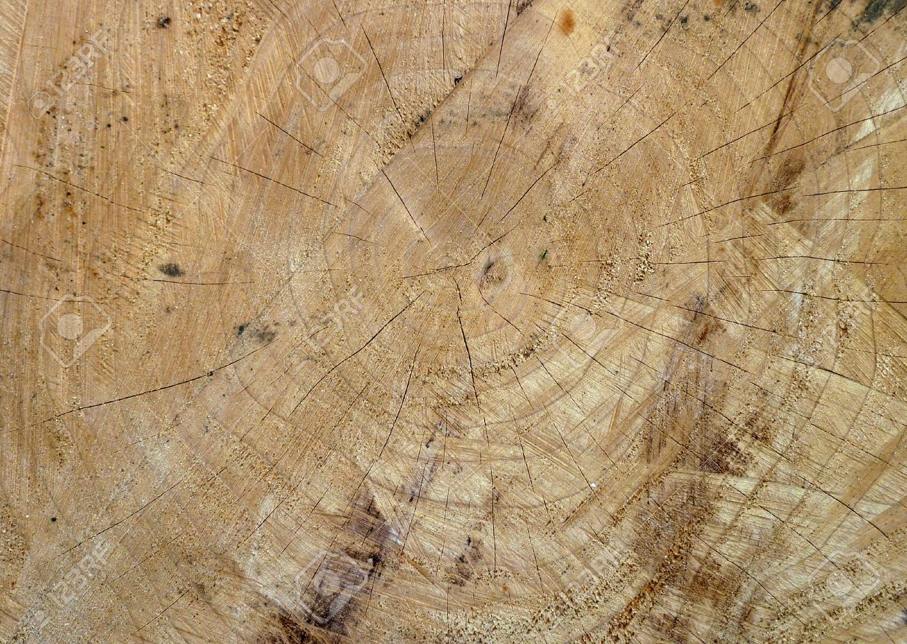 Closeup of freshly cut tree showing wood texture Stock Photo - 8109033