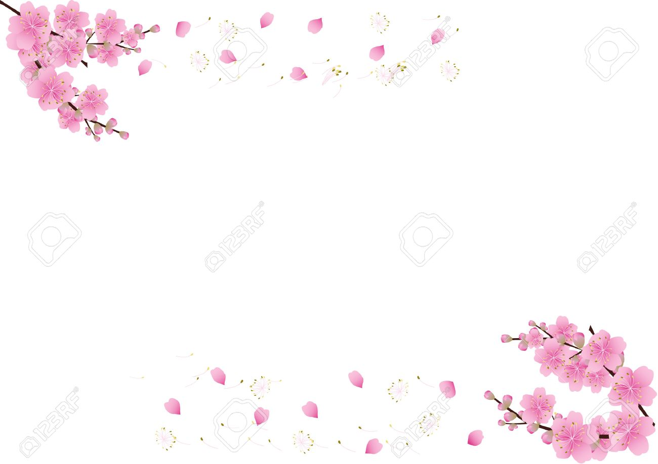 Sakura flowers background cherry blossom isolated white background sakura flowers background cherry blossom isolated white background stock vector 40456602 mightylinksfo