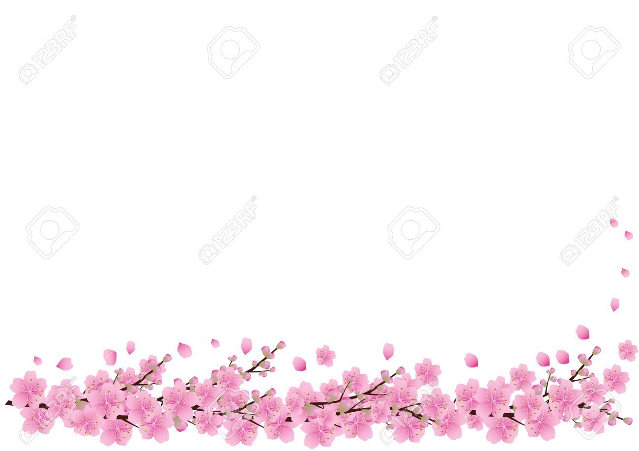 Pink Flowers Spring Background Sakura Cherry Blossom White With