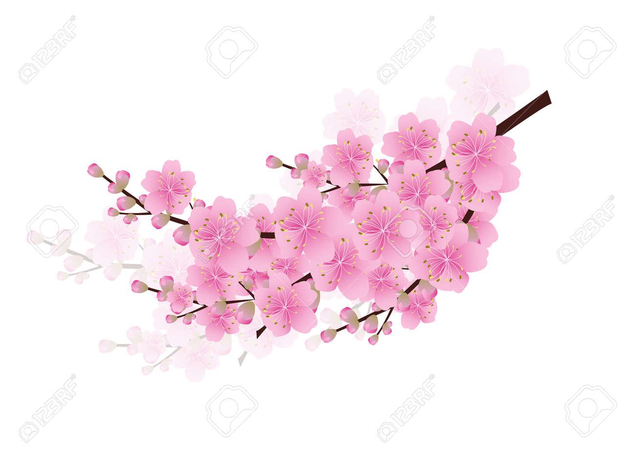 Fleurs Printemps Rose Fond Sakura Fleurs De Cerisier Blanc Avec