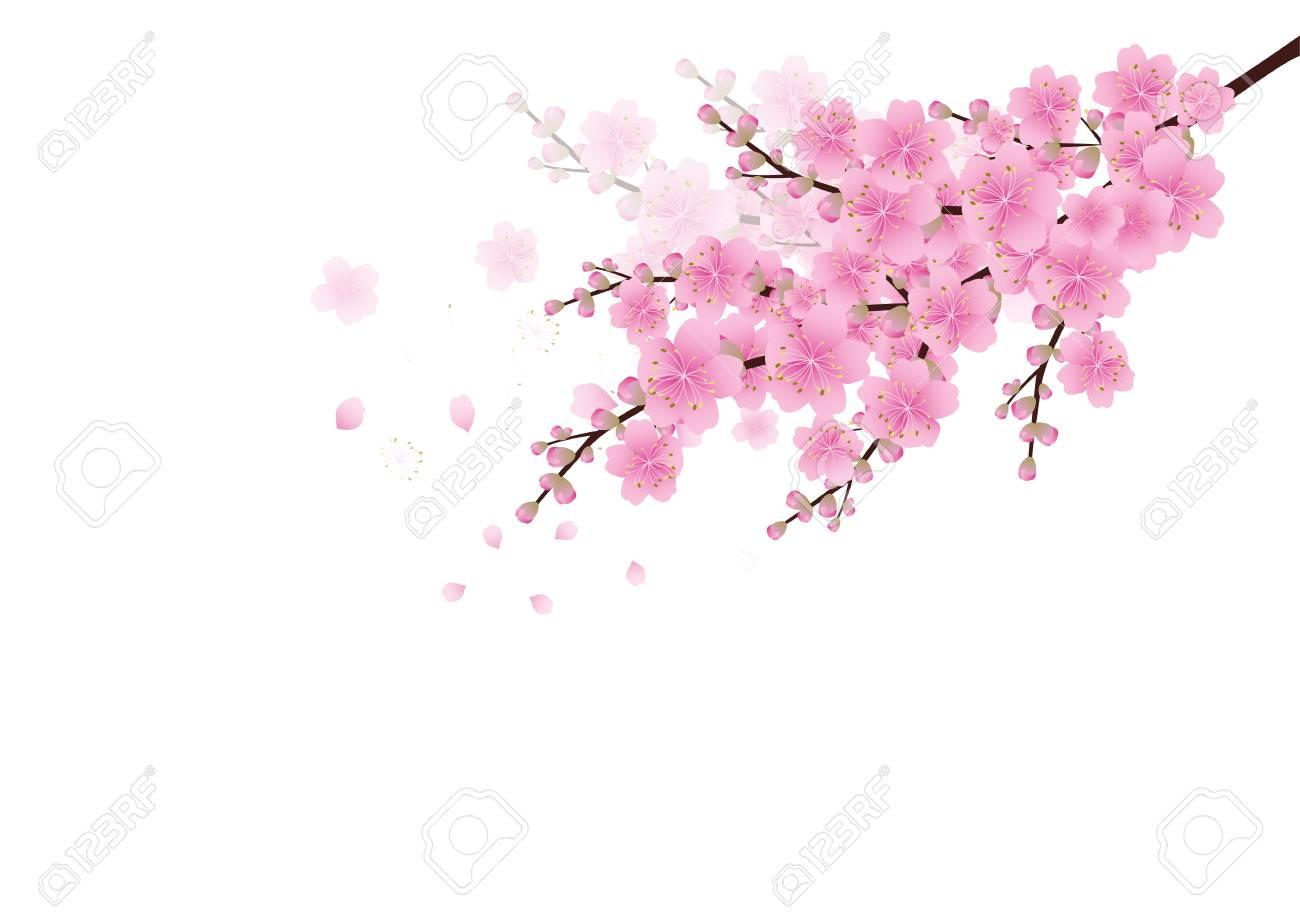 さくら桜イラストのイラスト素材ベクタ Image 75860642