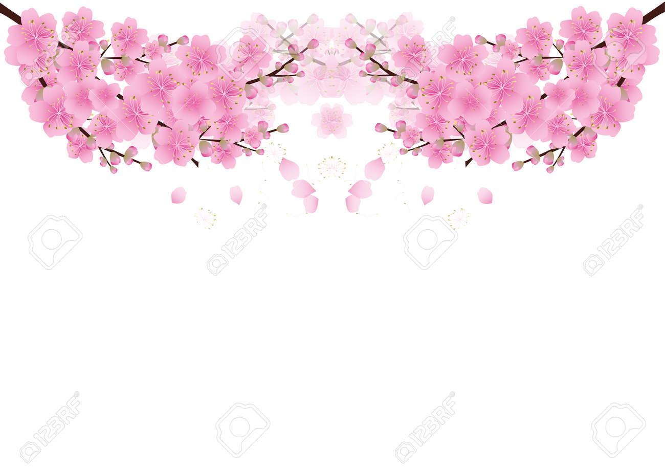 Vettoriale Sakura Fiori Sfondo Fiore Di Ciliegio Isolato Sfondo