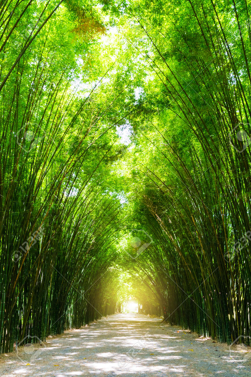 Tunnel bamboo tree with sunlight. - 82245021