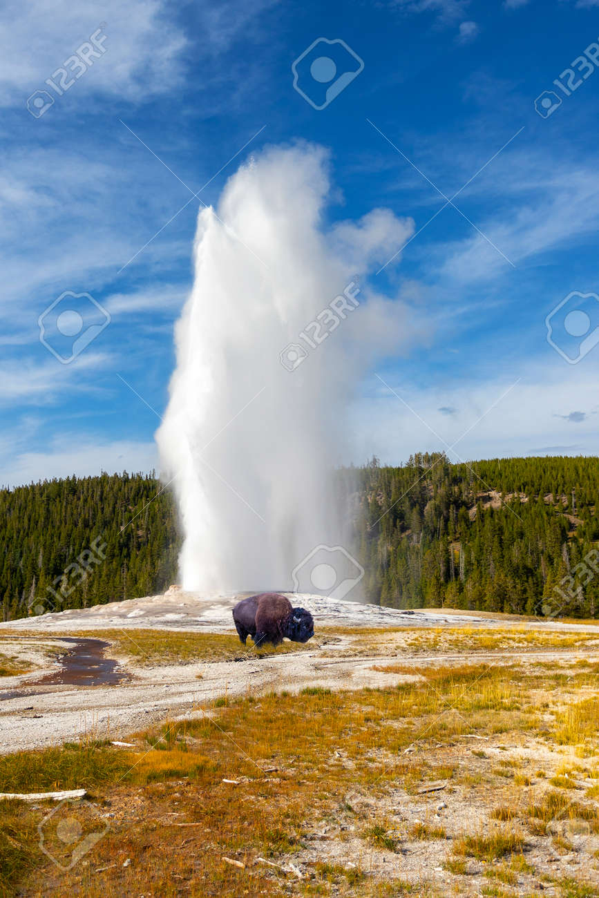 Old Faithful Geyser Erupts At Yellowstone National Park As A
