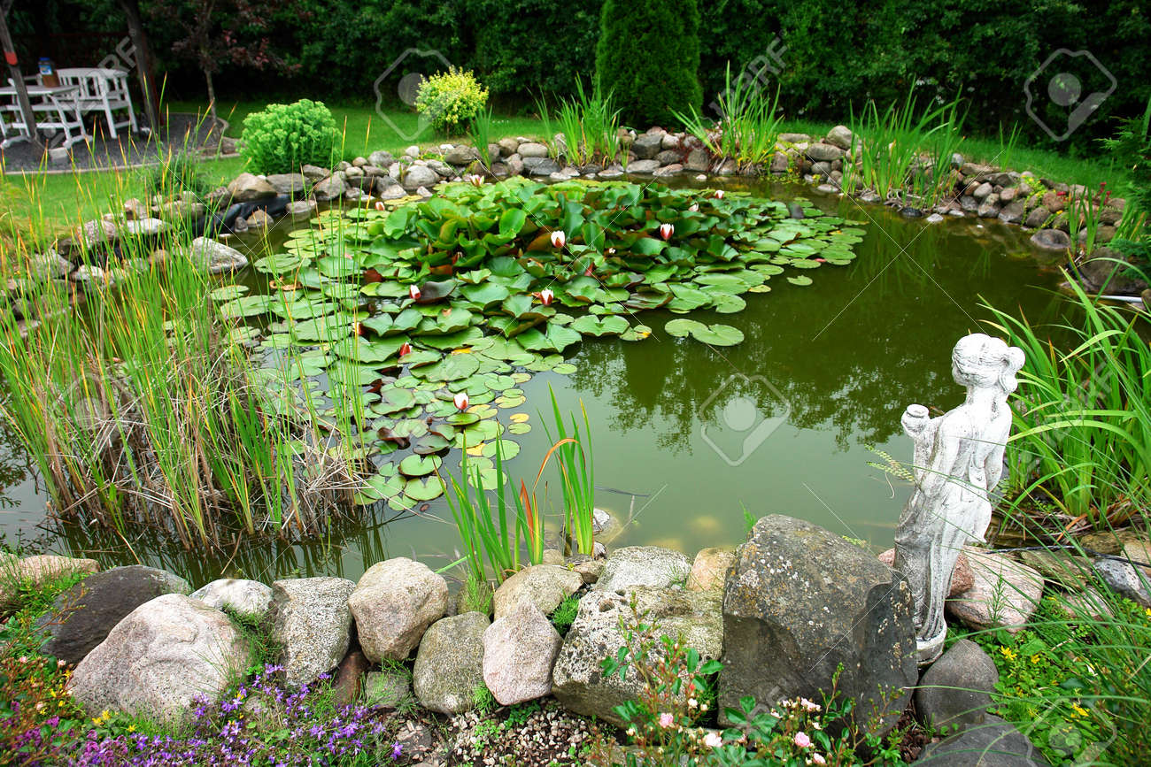 Beautiful Classical Garden Fish Pond With Blooming Water Lilies