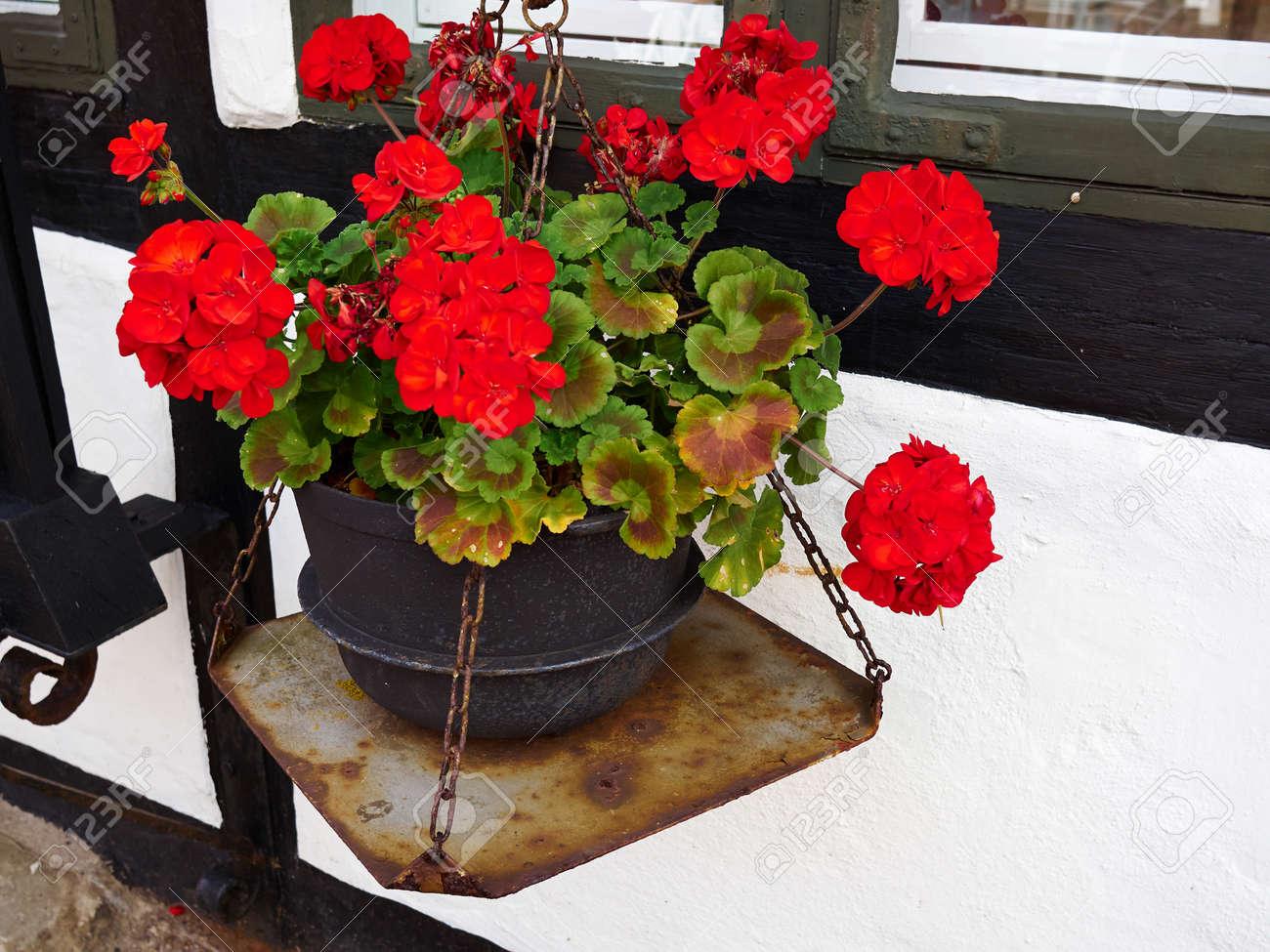 Schone Bluhende Bunte Blumen Durch Ein Fenster Klassische Typische