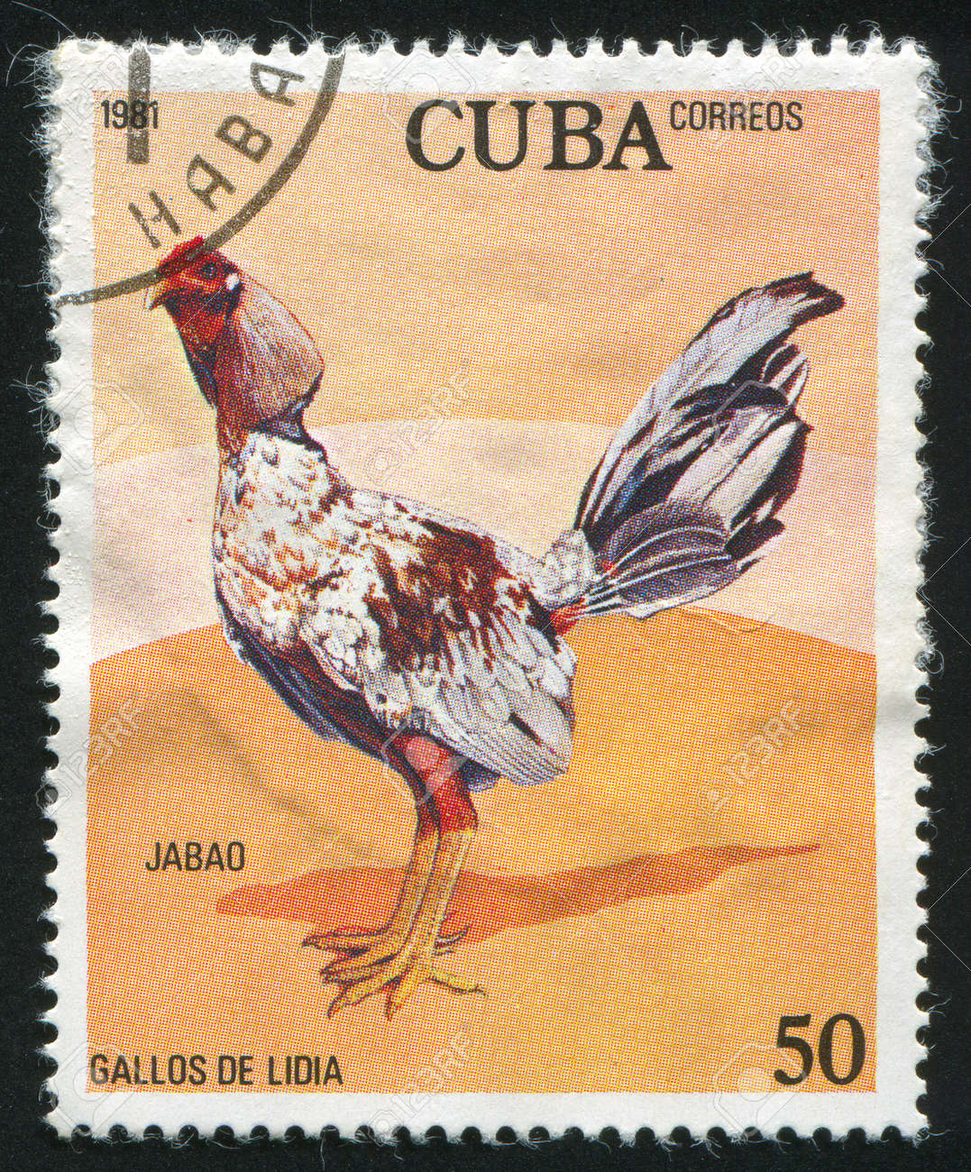 CUBA - CIRCA 1981: stamp printed by Cuba, shows cock jabao, circa 1981 Stock Photo - 9957418